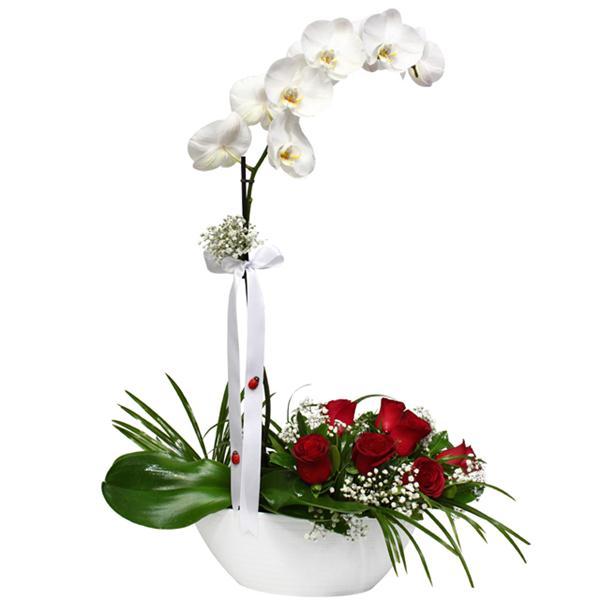 White Orchid and roses